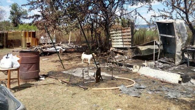 1 canile Incendio a Marcianise, lSOS del Rifugio di Trilly: Ci occorre cibo per gli animali