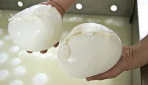 mozzarella 300x173 MOZZARELLA CAMPANA DOP IN VETRINA A DUBAI PER GULFOOD, CRESCE EXPORT NEI PAESI ISLAMICI