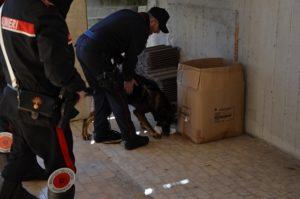 foto 1 1 300x199 ISERNIA: CONTROLLI ANTIDROGA PRESSO GLI ISTITUTI SCOLASTICI   TROVATA HASCHISCH E MARIJUANA