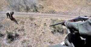 caccia2 banda 300x156 BRACCONAGGIO E UCCISIONE UCCELLI IN PERICOLO ESTINZIONE, DIVIETO DI DIMORA PER DUE UOMINI