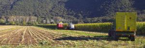 agricoltura 300x100 FN E SINLAI: DENUNCIANO LA CRISI DEL SETTORE AGROALIMENTARE