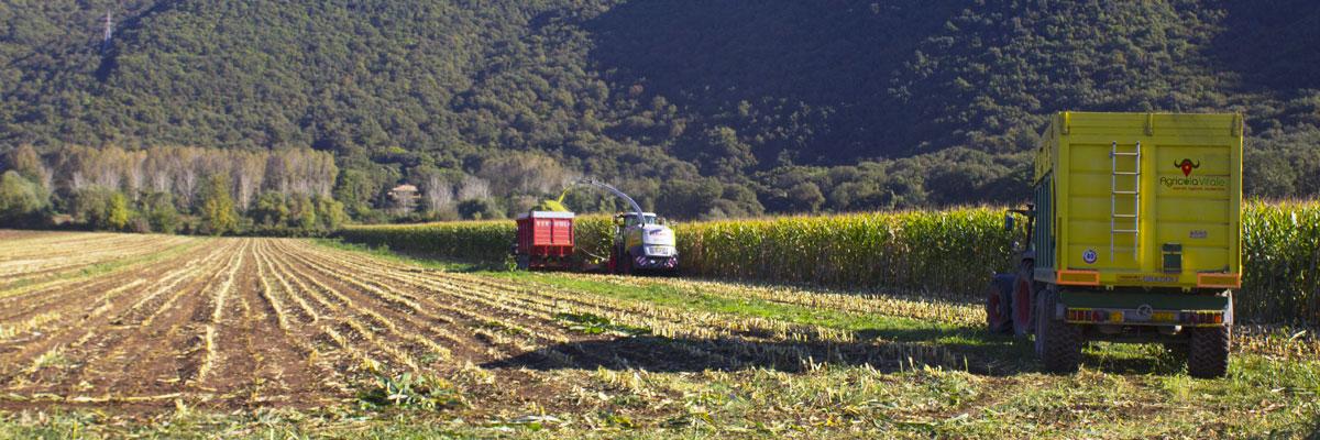 agricoltura BARBARO (LEGA): CASERTA E UN BENE SU CUI INVESTIRE