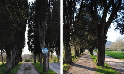 viali cimitero CIMITERO DI CASOLA, APPROVATO IL PROGETTO DEFINITIVO DI RIQUALIFICAZIONE