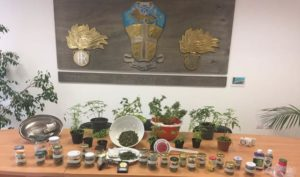 marijuana 300x177 11 PIANTINE DI MARIJUANA IN CASA, ARRESTATO MARCIANISANO