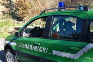 controlli CC Forestali 300x201 FURTO DI LEGNA A VENAFRO, DENUNCIATI SETTE CASERTANI