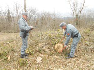 controlli CC Forestale 2 1 300x225 APPROPRIAZIONE INDEBITA, DENUNCIATO AMMINISTRATORE SOCIETA