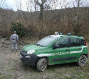 controlli CC Forestale 8 300x267 CONTROLLI ANIMALI, MULTE AD ALLEVATORE ISERNINO