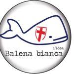 BALENA BIANCA 150x150 COMUNALI, AVERSA: BALENA BIANCA PRONTA A SCENDERE IN CAMPO