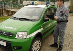 controlli CC Forestale 1 300x209 ISERNIA, CONTROLLI DI POLIZIA VETERINARIA: MULTE PER I RESPONSABILI