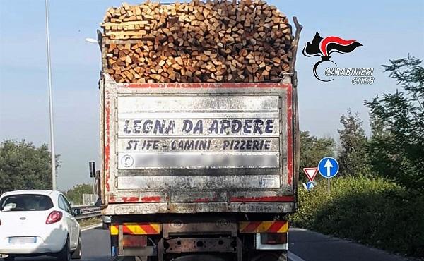cites legno pizzerie NAPOLI, LEGNA DERIVANTE DA ILLEGAL LOGGING: OLTRE 200MILA EURO DI SANZIONI A IMPORTATORI E COMMERCIANTI