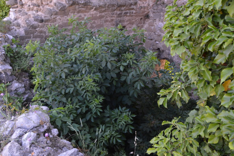 DSC 0857 CASERTAVECCHIA, LA VERGOGNA DI UN SINDACO…LA NOSTRA VERGOGNA