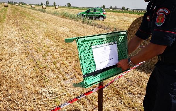 IMG 20190612 WA0007 VILLA LITERNO: LA FORESTALE SEQUESTRA ALTRI DUE FONDI AGRICOLI