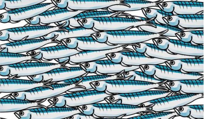 sardine 1 IL GRATTA E VINCI DELLA POLITICA