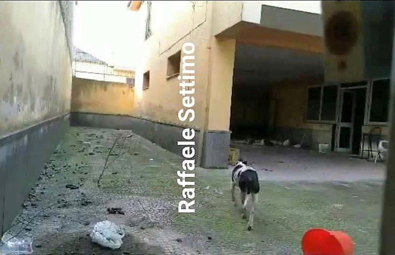 cane casale scaled STORIA DI UN CANE ABBANDONATO NEL DESERTO CASALESE (video)