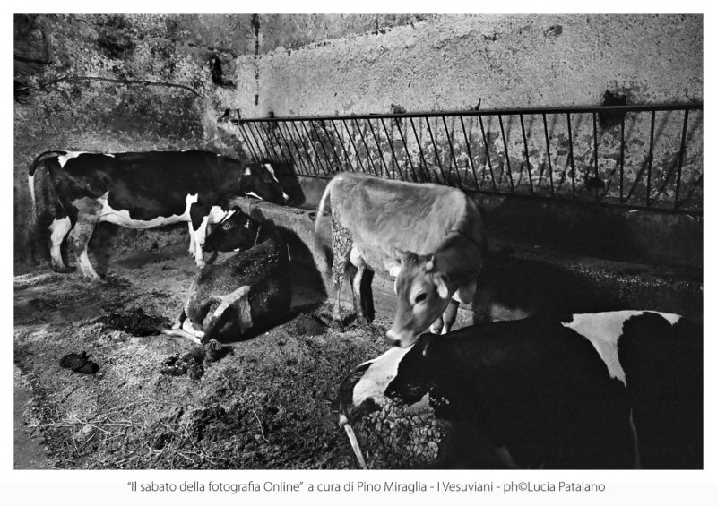 """I Vesuviani ph©LuciaPatalano04 min 1 scaled """"I VESUVIANI"""", RACCONTO A COLORI E IN BIANCO E NERO: TERZO APPUNTAMENTO CON """"IL SABATO DELLA FOTOGRAFIA"""""""