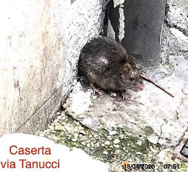 """ratto CASERTA, MARINO IL MISERICORDIOSO """"RATTISTA"""""""