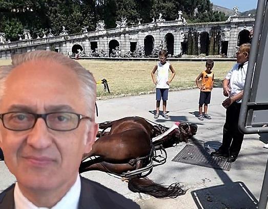 cavallo 1 CAVALLO MORTO NELLA REGGIA: LINTERVENTO DEL SINDACO MARINO