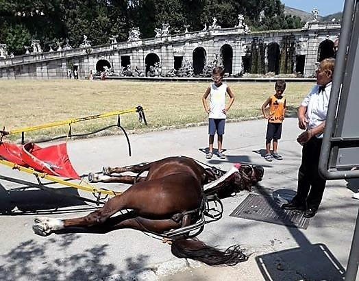 cavallo IL PARCO REALE E LA VERGOGNA INFINITA: UN CAVALLO STRAMAZZA AL SUOLO E MUORE SFINITO