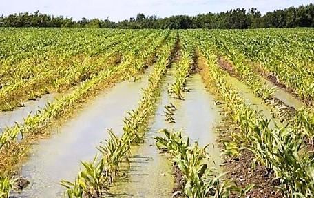 DANNI AGRICOLTURA BATTIPAGLIA, AZIENDE AGRICOLE COLPITE DAL MALTEMPO: DANNI PER UN MILIONE A STRUTTURE E COLTURE