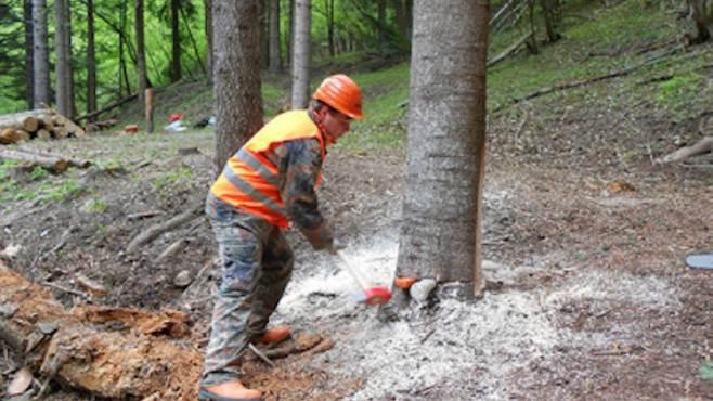 operai forestali lavoro FORESTALI: I SINDACATI SCRIVONO ALLASSESSORE ALLAGRICOLTURA NICOLA CAPUTO