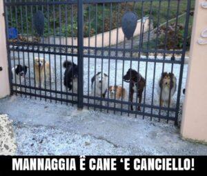 """mannaggia cane e canciello 300x255 SESSA E I SUOI """"CANE E CANCIELL""""   L'INVASIONE DEI TROLL"""